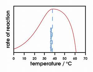 File Effect Of Temperature On Enzymes Svg