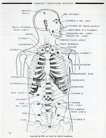Applied Kinesiology Muscle Testing Chart