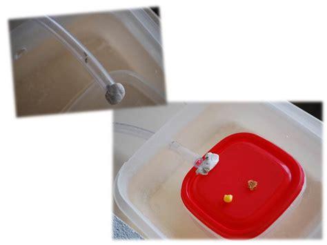 fourmis cuisine fourmis dans la cuisine 28 images en tha 239 lande la