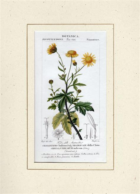 fiori botanica galleria garisenda di emanuela cavalleri catalogo ste