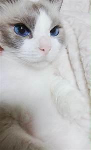 Large Worlds Most Beautiful Cat Www Com - Litle Pups