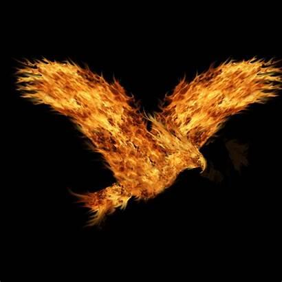 Eagle Flying Flaming Phoenix Animated Flight Favorites