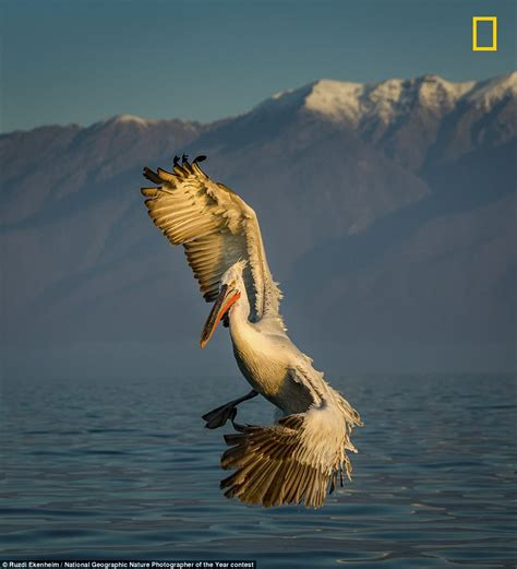 National Geographic Nature Photographer of the Year 2017 ...