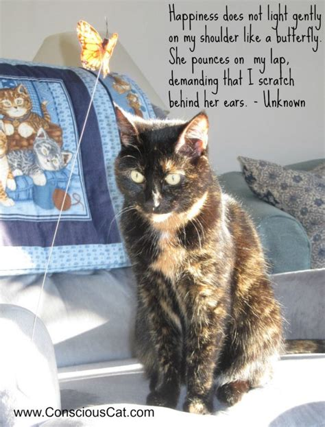 sunday quotes happiness  conscious cat
