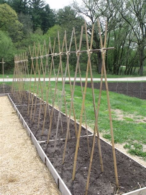 Which Trellis Is The Best Trellis? — Seed Savers Exchange