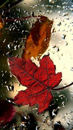 Autumn Fall Gold Wallpaper Iphone by 609 Best Autumn Wallpapers Images On In 2018