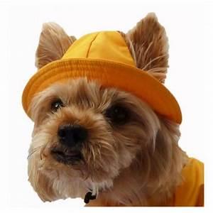 Video Pour Chien : bob marin pour chien ~ Medecine-chirurgie-esthetiques.com Avis de Voitures