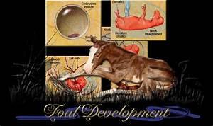 Mare Chart Double L Acres 39 Foal Development Page