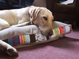 Homemade Dog Bed