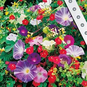 Schnell Rankende Pflanzen : blumensamen garten vertrieb garten vertrieb alles f r den garten ~ Frokenaadalensverden.com Haus und Dekorationen
