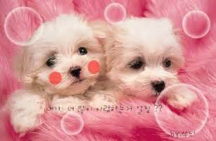 Very Cute Kittens and Puppies