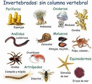 Imágenes de animales invertebrados Imágenes