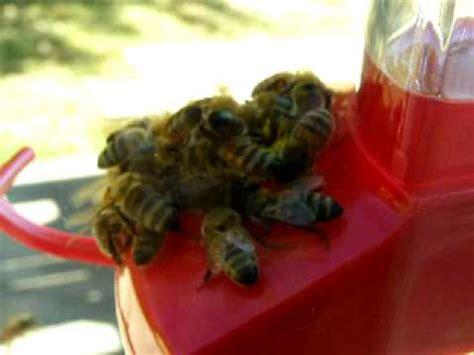 honey bee feeding frenzy on hummingbird feeder close up