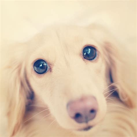 suesse und lustige hunde selfies bravo