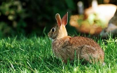 Rabbit Wallpapers Animals Desktop Striped Grass Biggest