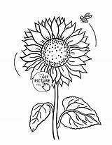 Sunflower Simple Drawing Flower Drawn Getdrawings Kid sketch template