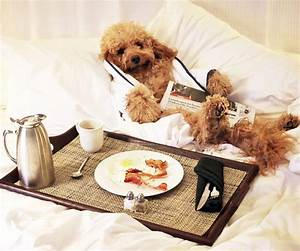 Pet Friendly Hotels Around the U S InStyle com