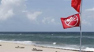 Hurricane Michael Failed To End Gulf Coast U0026 39 S Red Tide