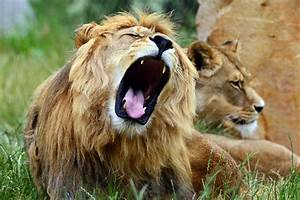 American woman dies after lion attack in park | New York Post
