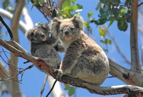 chambre lune de miel escapade de charme sur l 39 île de kangaroo island