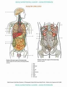 Poultry Medicine Chart Chart Major Organs Heal Something Good