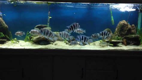 Aquascaping Cichlid Aquarium by 300g Cichlid Aquascape
