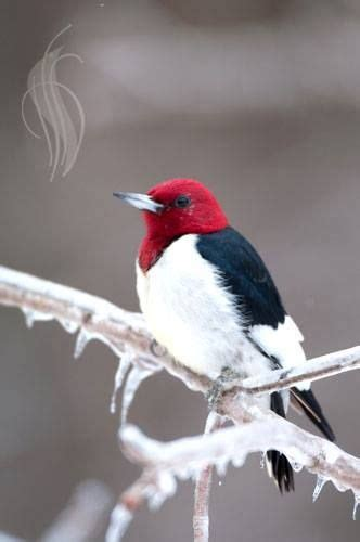 beautiful  winter   ojays  pinterest