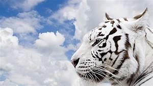 Imagenes para fondo de pantalla de animales - Imagui