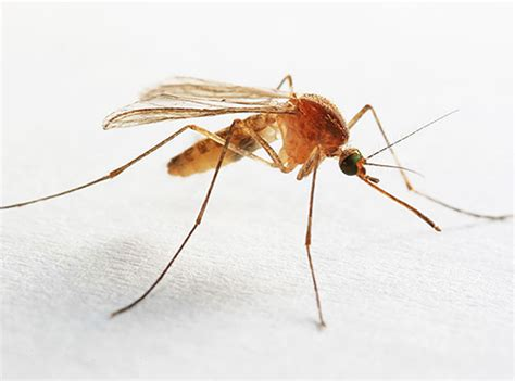 Kleines Bad Hohe Luftfeuchtigkeit by Insekten Im Bad Und In Der Toilette Warum Sie