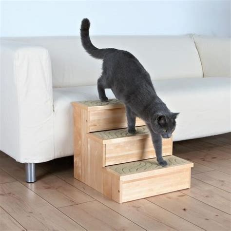 escalier bois pour chien et chien blessé handicapé