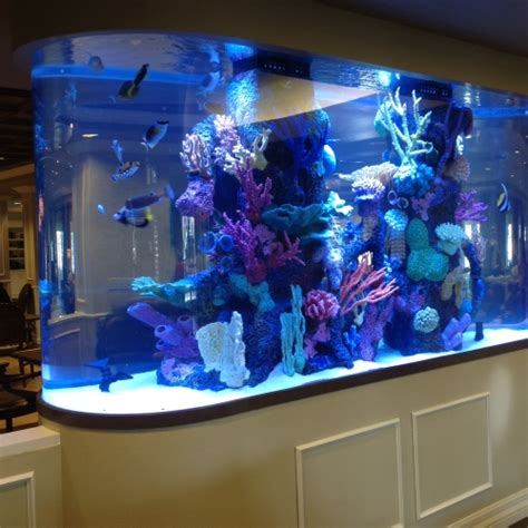 gallon race track  faux reef aquarium maintenance las vegas infinity aquarium