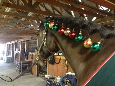 christmas decorating with horses best 25 stall decorations ideas on