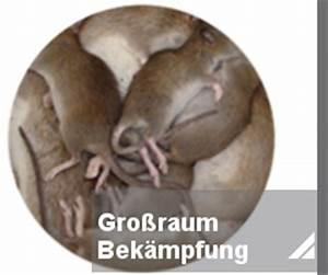 Ratte Im Haus : rattenbek mpfung notdienst toxtron in essen oberhausen kammerj ger sch dlingsbek mpfung nrw ~ Buech-reservation.com Haus und Dekorationen