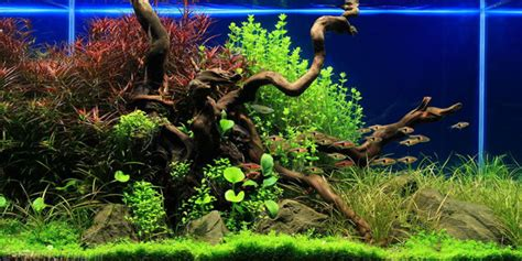 Aquascape Style by Understanding Taiwanese Aquascaping Style The Aquarium Guide
