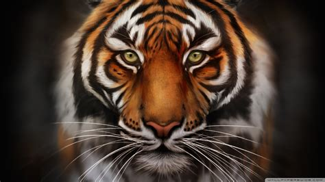 Gesits Wallpapers by 1920x1080 Tiger Wallpaper Hd 65 Images