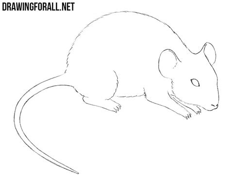draw  mouse drawingforallnet