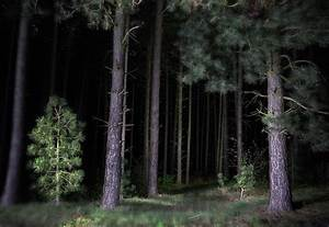 Pine Tree Forest At Night Photograph by Dirk Ercken