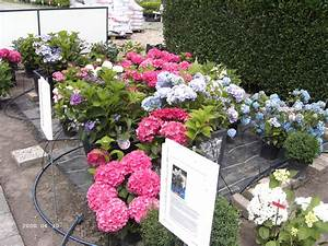 Hortensien Vermehren Wasserglas : pflege ~ Lizthompson.info Haus und Dekorationen