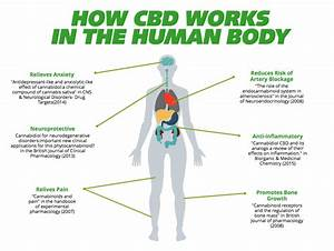 cbd oil uses for humans