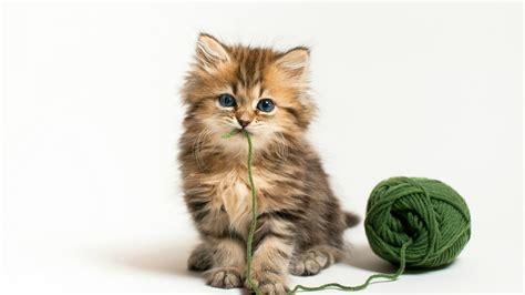 Animated Kitten Wallpaper - kitten wallpaper