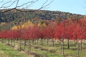 Snowdrift Crabapple Fall Trees