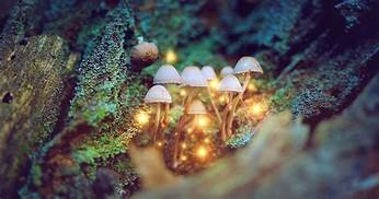 People who 'microdose' psychedelic drugs for a month say it increases positive emotions and productivity…