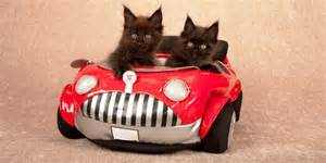 cat car what to pack when you re traveling with cats by car catster