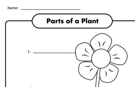 parts of a plant worksheet for k free science 731 | 3acbf5a331d40b47e247d3e1d6436c07
