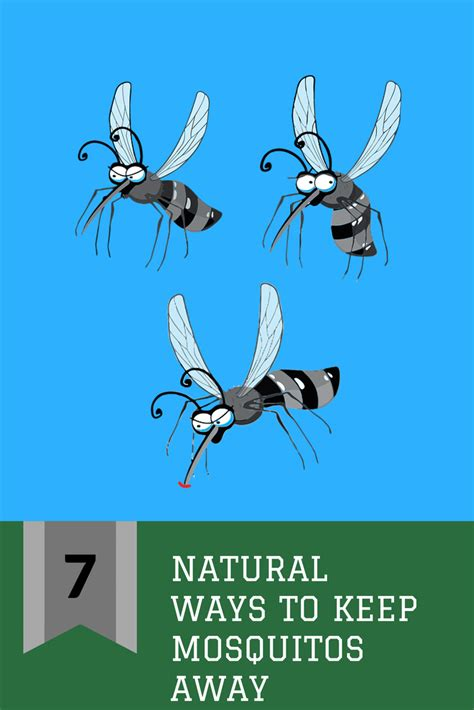 how to keep away mosquitoes from home seven natural ways to keep mosquitos away close to home