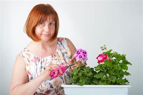 Geranien überwintern Im Blumenkasten by Geranien Im Balkonkasten 252 Berwintern 187 So Geht S
