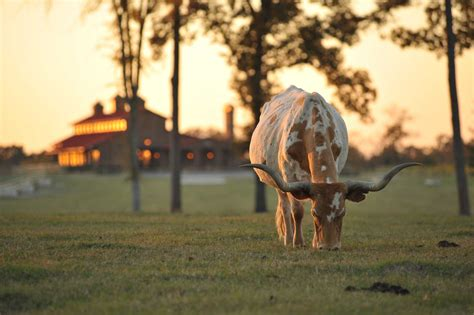 massive  million texas ranch palace sold  undisclosed