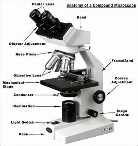 The Compound Microscope