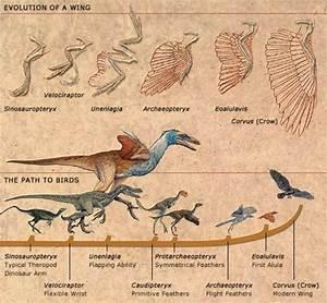 Evolution Of Birds Timeline