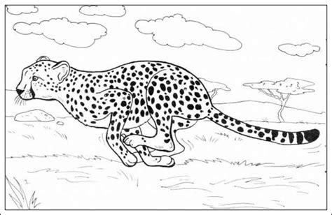 gepard ausmalbilder malvorlagentvcom